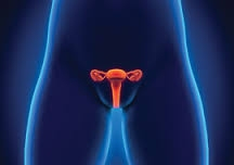 Gynaecological Services